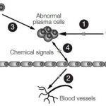 thalidomide-mechanisms-of-action