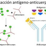 reaccion-antigeno-anticuerpo