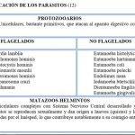 clasificacion-parasitos