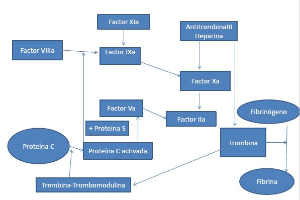 anticoagulante-lupico-cascada-coagulacion