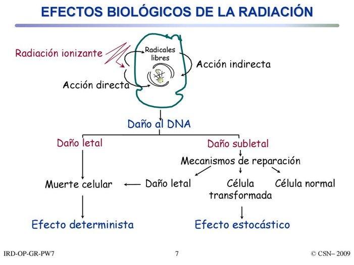 efectos-biologicos-radiacion