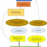 tratamiento-osteoporosis-fractura-cadera
