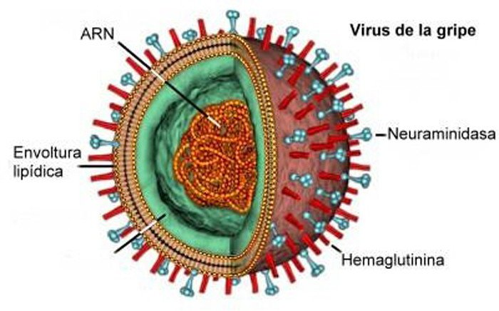 virus-influenza-H1N1-servicios-urgencias