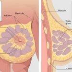 1-anatomia-mama