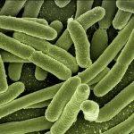 lactoferrina-inmunidad-defensas