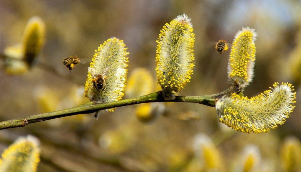 alergia-polen-alergenos